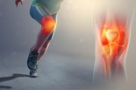 膝蓋靭帯炎 画像